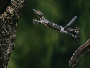 Un lagarto saltando al árbol