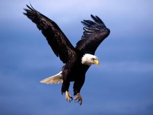 Postal: La garras de un águila