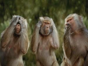 Postal: Tres monos chistosos