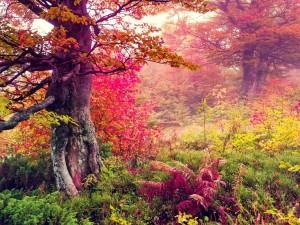 Postal: Espectacular paisaje otoñal