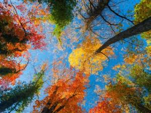 Postal: Árboles otoñales y el cielo azul