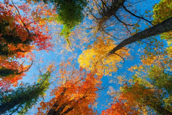 Árboles otoñales y el cielo azul