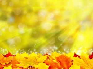 Hojas de otoño iluminadas por el sol
