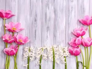 Postal: Tulipanes y jacintos sobre una pared