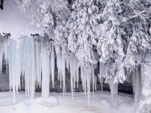 Postal: Nieve y hielo en la naturaleza