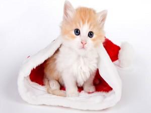 Gatito en un gorro de Santa Claus