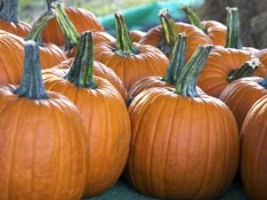 """Grandes calabazas para decorar en """"Halloween"""""""