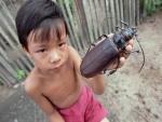 Niño sosteniendo un escarabajo titán (Titanus giganteus)