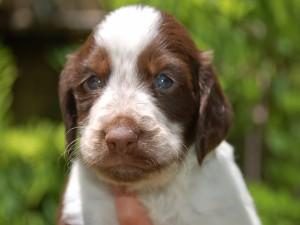 Postal: Un bonito cachorro marrón y blanco