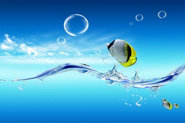 Peces persiguiendo burbujas