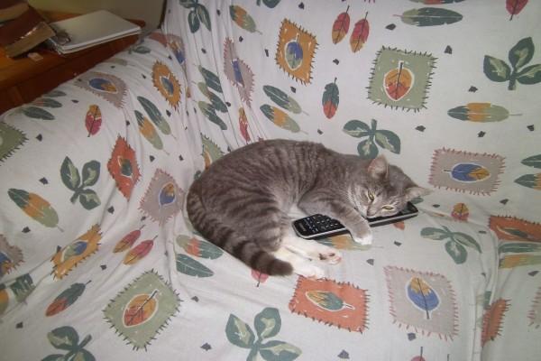 Un gato sobre el mando de la tele