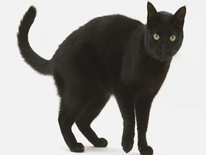 Postal: Un gato negro