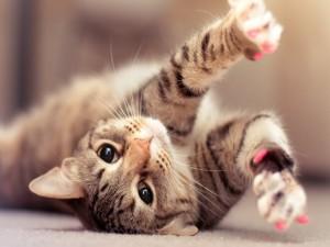 Postal: Gato con las uñas rosas