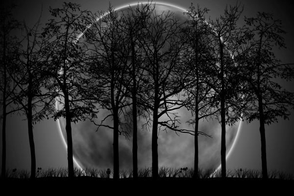 Gran luna tras los árboles