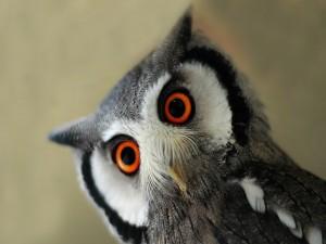 Postal: Búho con los ojos de color naranja