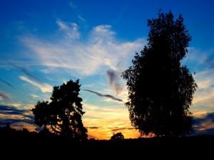 Amanecer tras los árboles