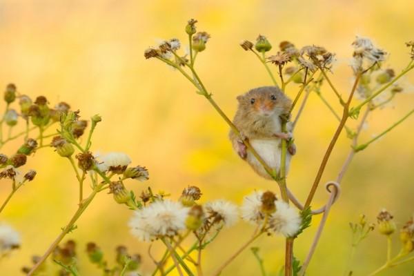 Ratoncito subido a una rama