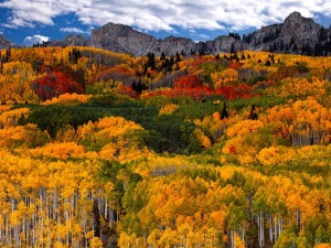 Postal: Árboles en otoño en Canadá