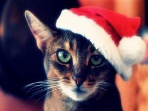 Postal: Gato de ojos verdes con un gorro de Santa Claus