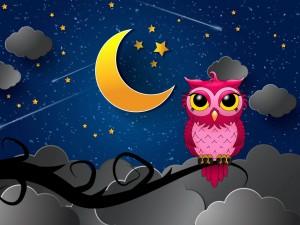 Postal: Búho rosa en una noche silenciosa