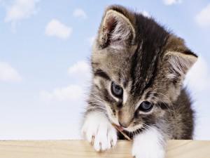 Gatito rompiendo la madera