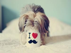 Postal: Un perro con el hocico dentro de una taza