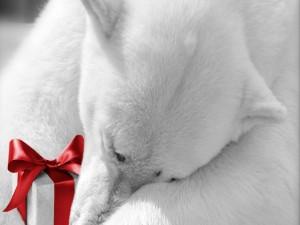 Postal: Oso polar con un regalo Navideño