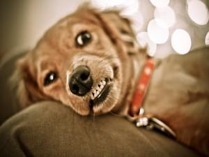 Un perro rabioso