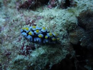 Animal marino sobre una roca