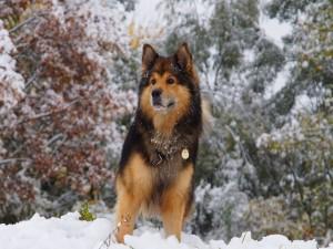Un bonito perro en la nieve