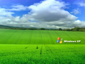 Postal: Logo de Windows XP en un campo verde