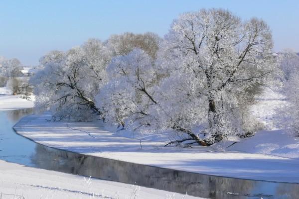 Una fría mañana de invierno en un entorno natural