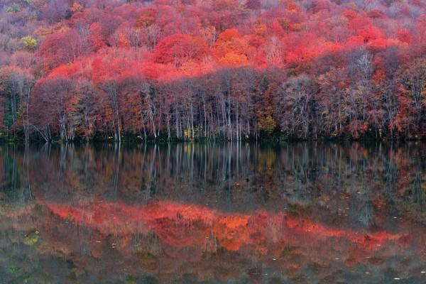 Precioso árboles reflejados en el agua en otoño