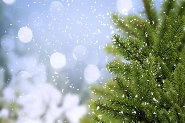 Copos de nieve sobre un abeto