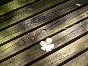 Postal: Una flor sobre el camino de madera