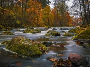Río con rocas y hojas otoñales