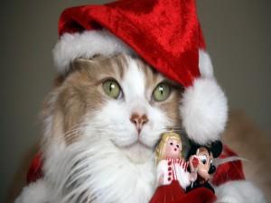 Postal: Un tierno gato disfrazado de Papa Noel