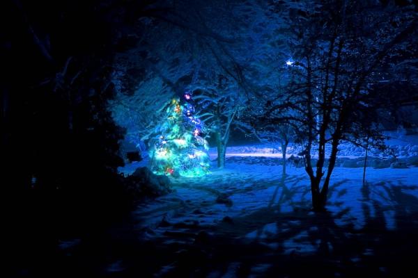 Un árbol de Navidad iluminado en la noche