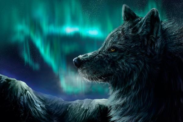 Gran lobo en una noche mágica
