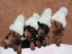 Cachorros dormidos con un gorrito blanco