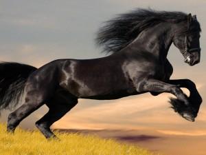 Un gran caballo negro