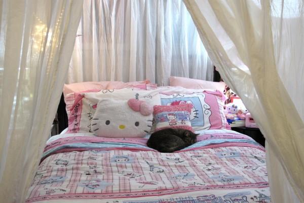 Gato dormido sobre una cama de Hello Kitty