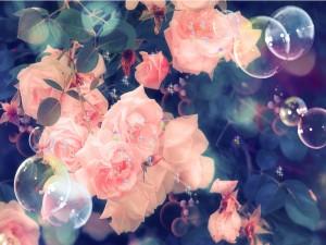Postal: Pompas y destellos junto a un rosal