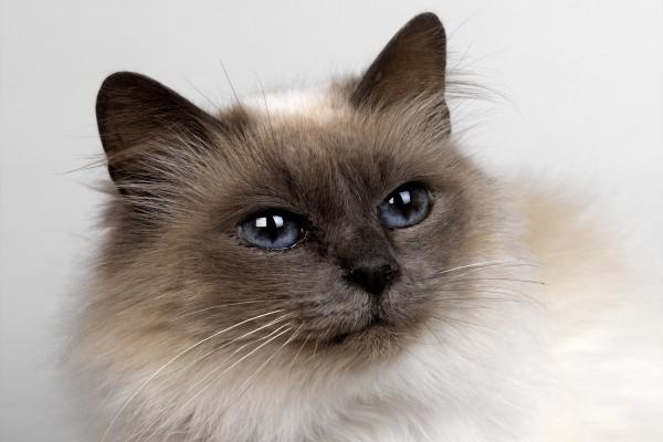 Un gato con brillantes ojos