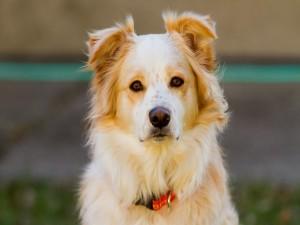 Bonito perro con manchas en el hocico