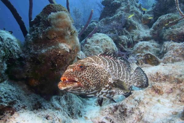 Gran pez con manchas en el fondo del mar