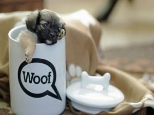 Un cachorrito dentro de una taza