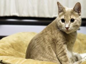 Un hermoso gato sentado en su cesto