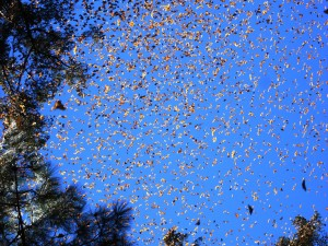 Mariposas monarca cubriendo el cielo azul
