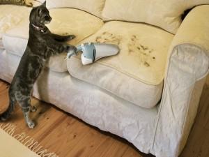 Un gato aspirando sus pelos del sofá